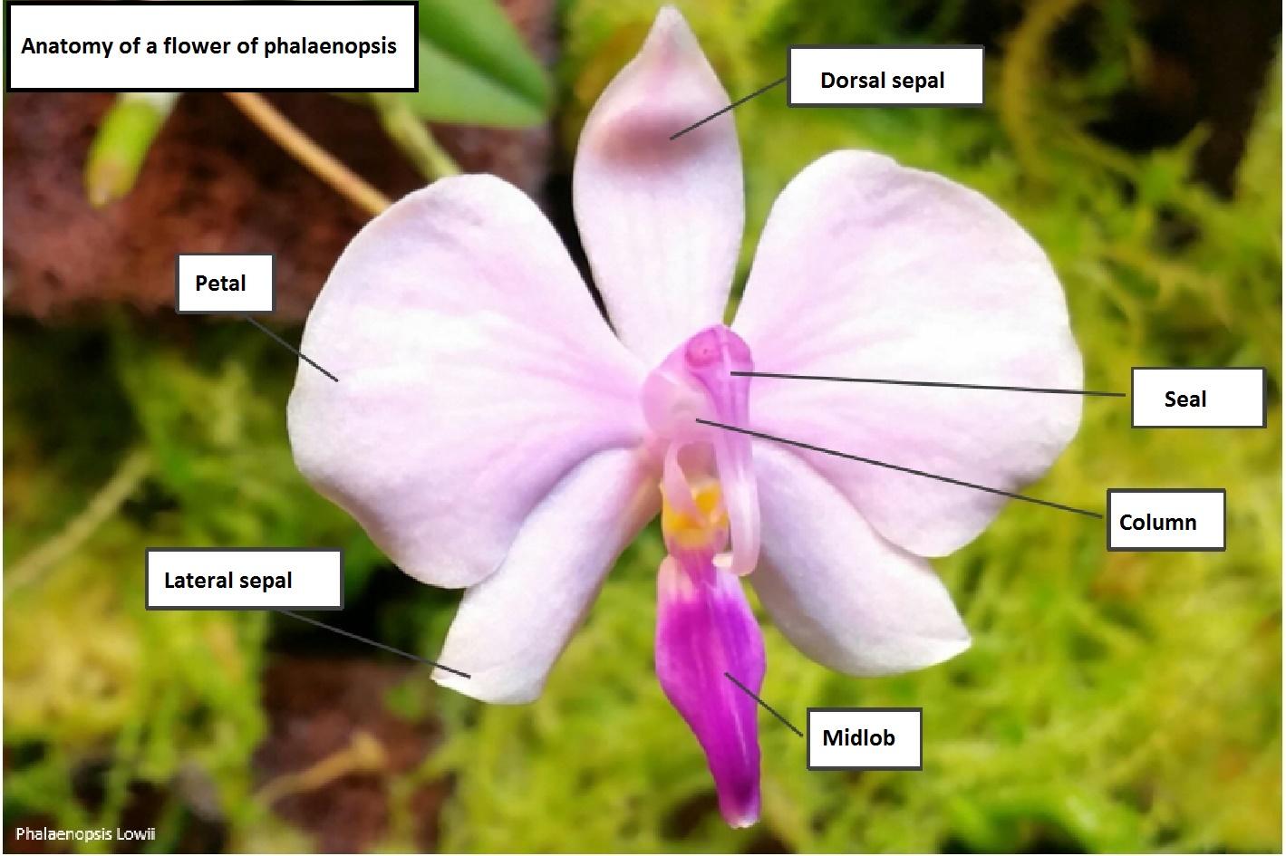 pollinisation01-eng.jpg